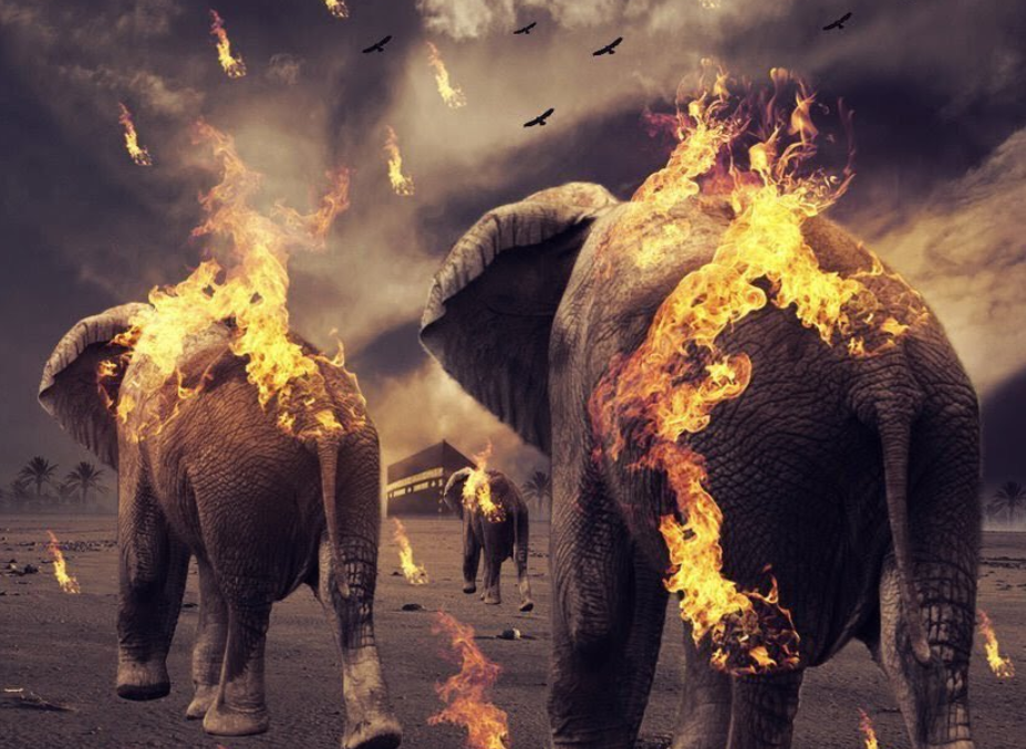 قصة أحداث عام الفيل